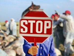 stop_asf